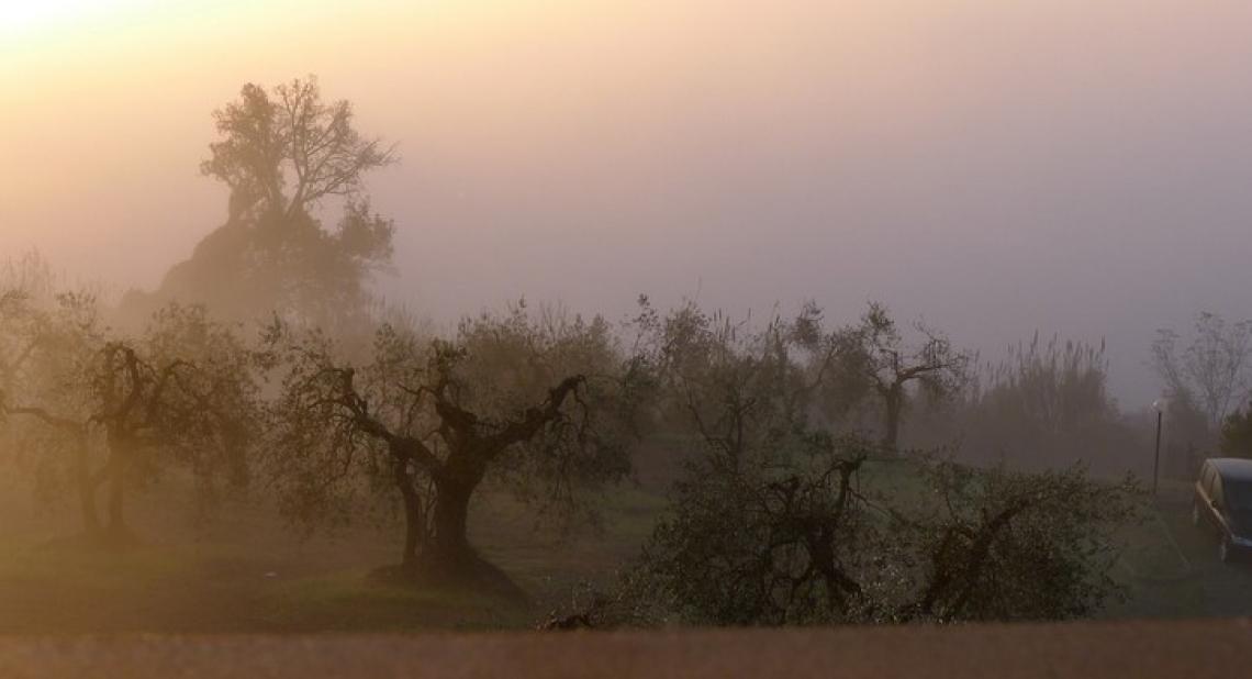 Gli uccelli insettivori non sono d'aiuto nella lotta contro i parassiti degli olivi