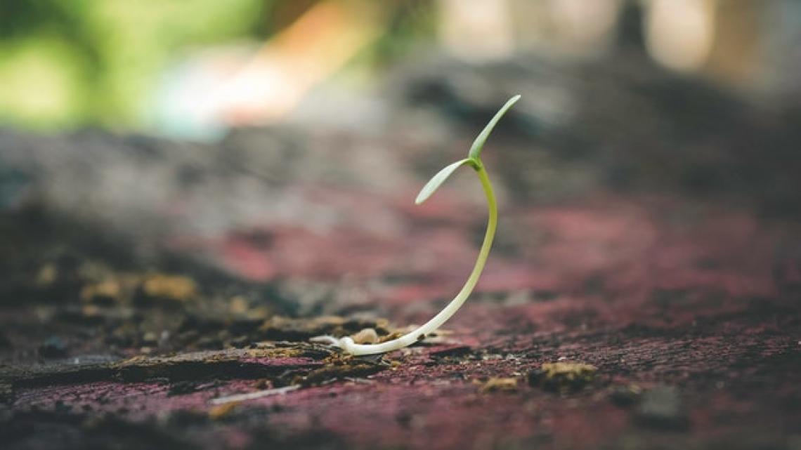 Solo il 5% delle sementi è bio, servono nuove e maggiori varietà