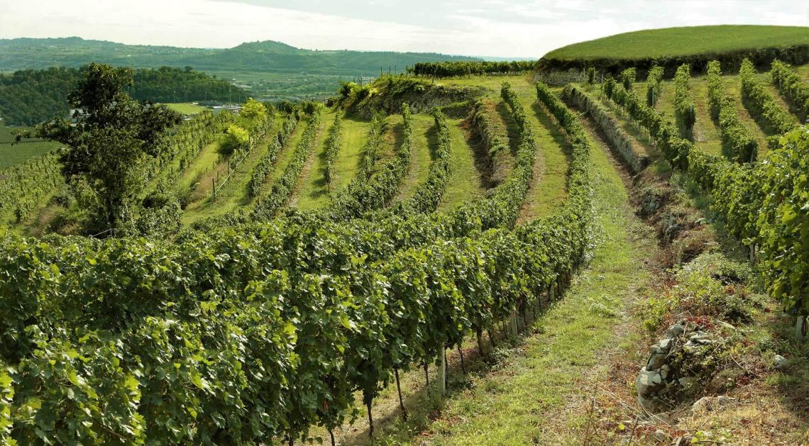 Un unico standard internazionale di sostenibilità ambientale per il vino