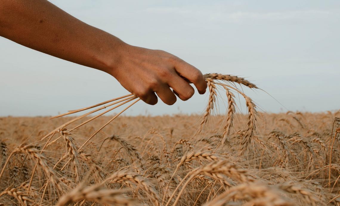 Per raggiungere la sicurezza alimentare puntare sull'agroecologia