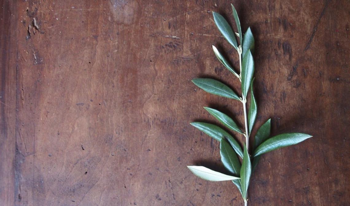 Cosa significa davvero pensare all'olivo e al suo futuro