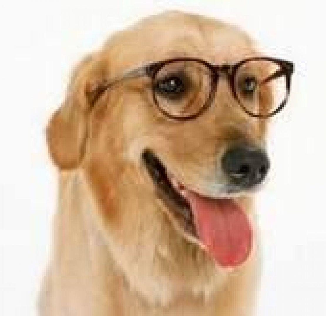 Animali senza cuore. L'uomo o il cane?