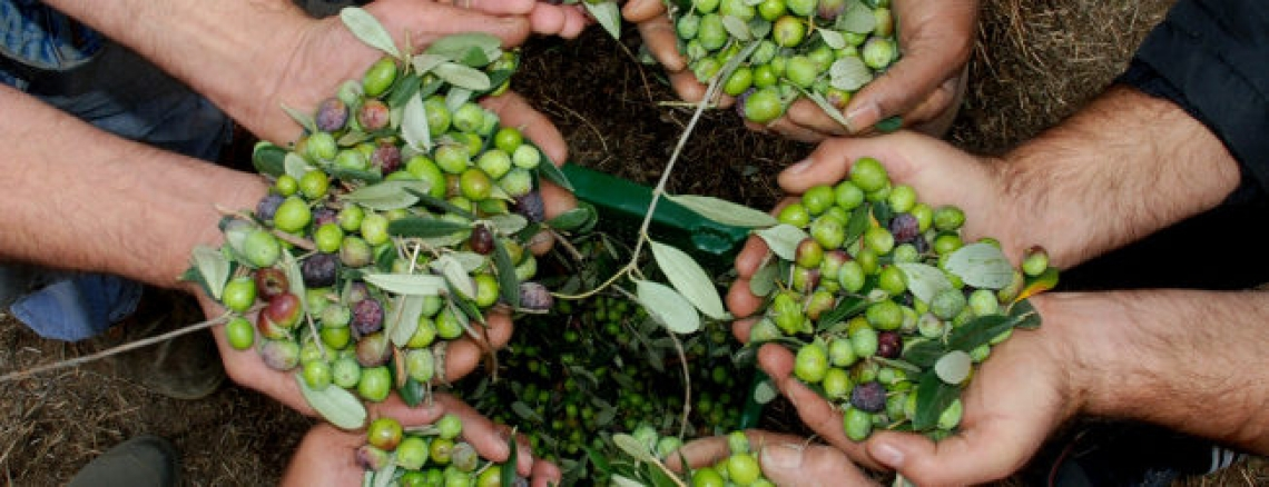 I tecnici del Fooi in assise per trovare soluzione ai problemi dell'olivicoltura italiana