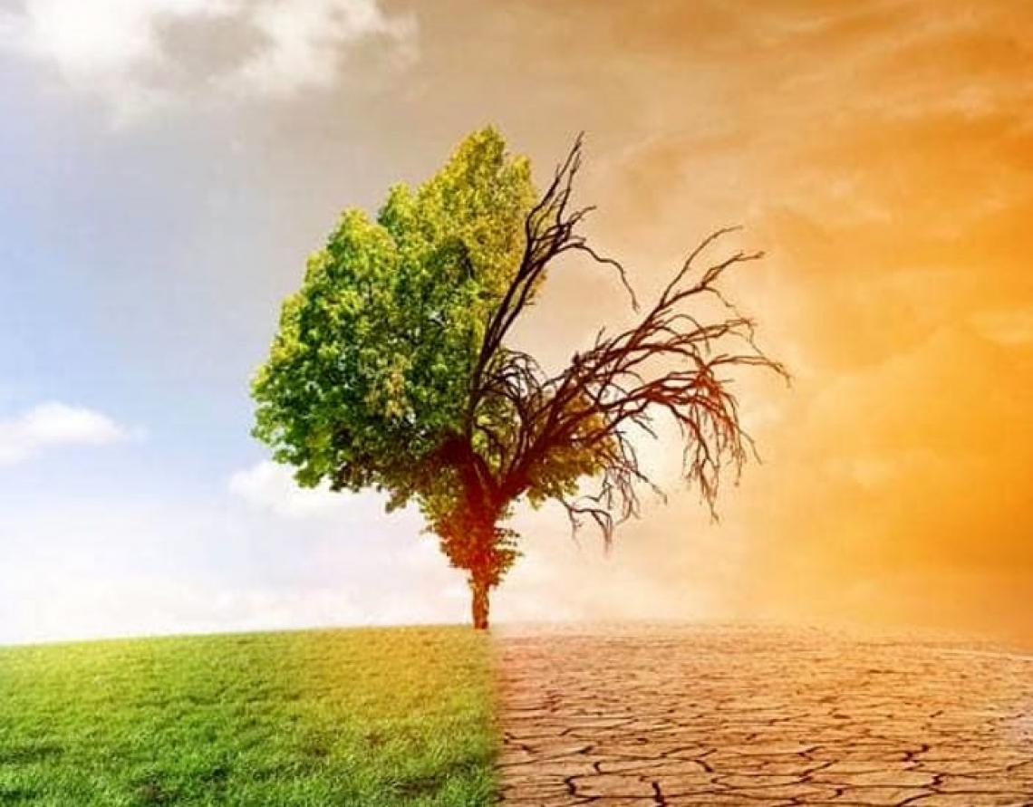 Non subire ma gestire i cambiamenti climatici in agricoltura e olivicoltura