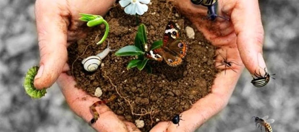 L'allarme mondiale per la biodiversità: una specie su otto si estinguerà a breve