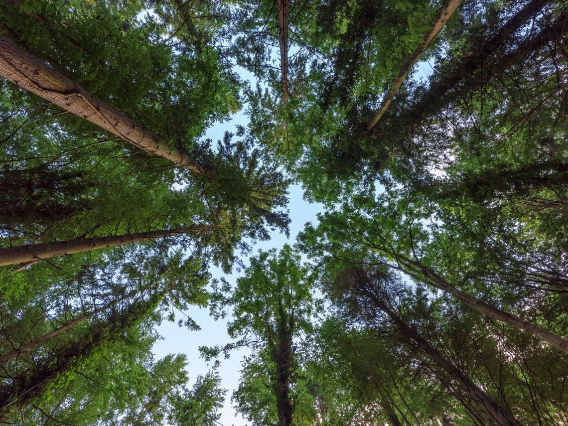 Un albero in più : il progetto delle Comunità Laudato sì per piantare 60 milioni di alberi