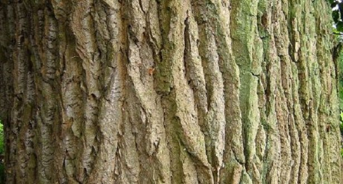 L'impiego degli imballaggi in legno di pioppo per i prodotti biologici va promosso