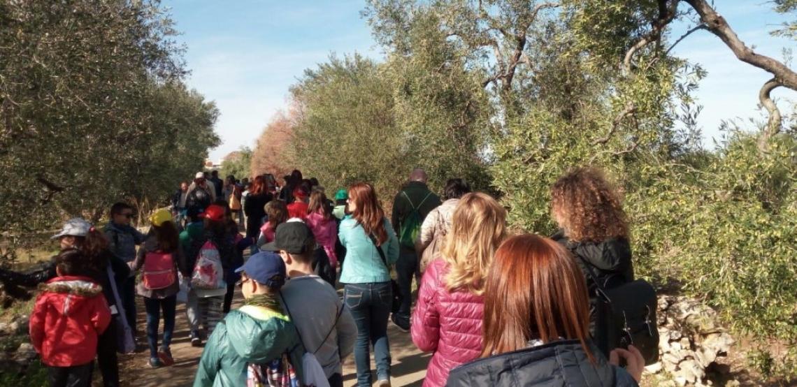 Torna la Camminata tra gli olivi, tra svago e cultura