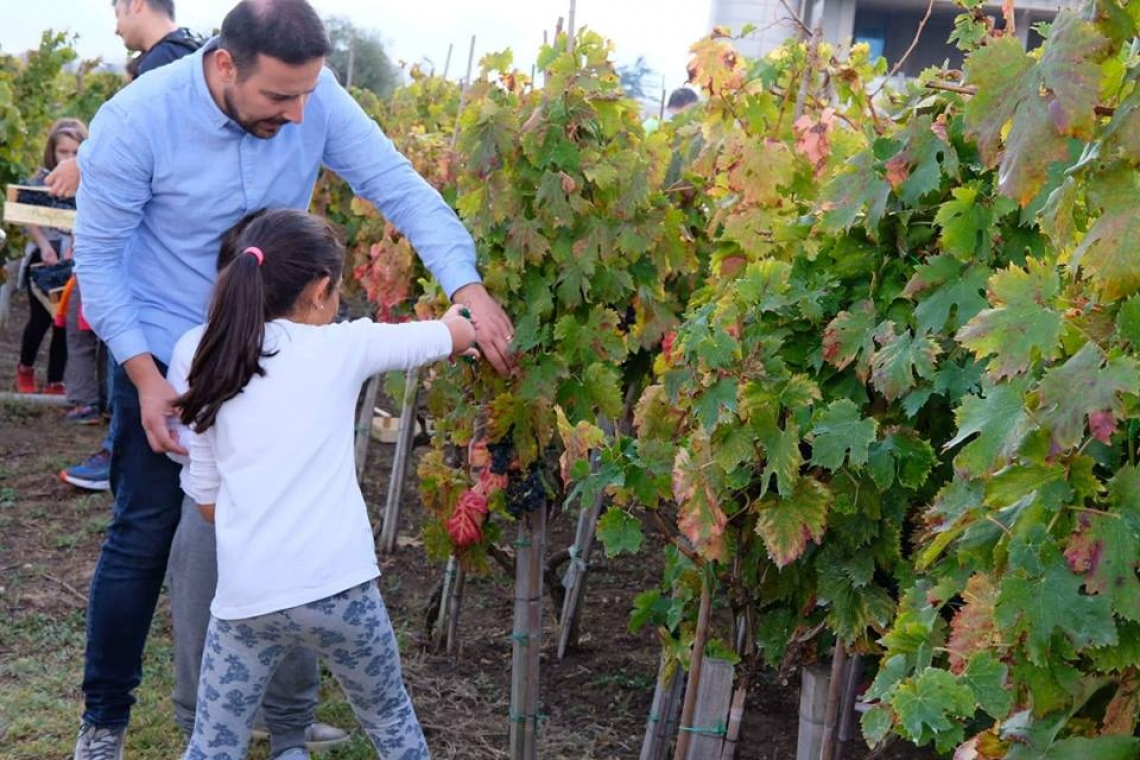 Anche in Abruzzo torna Cantine Aperte in Vendemmia