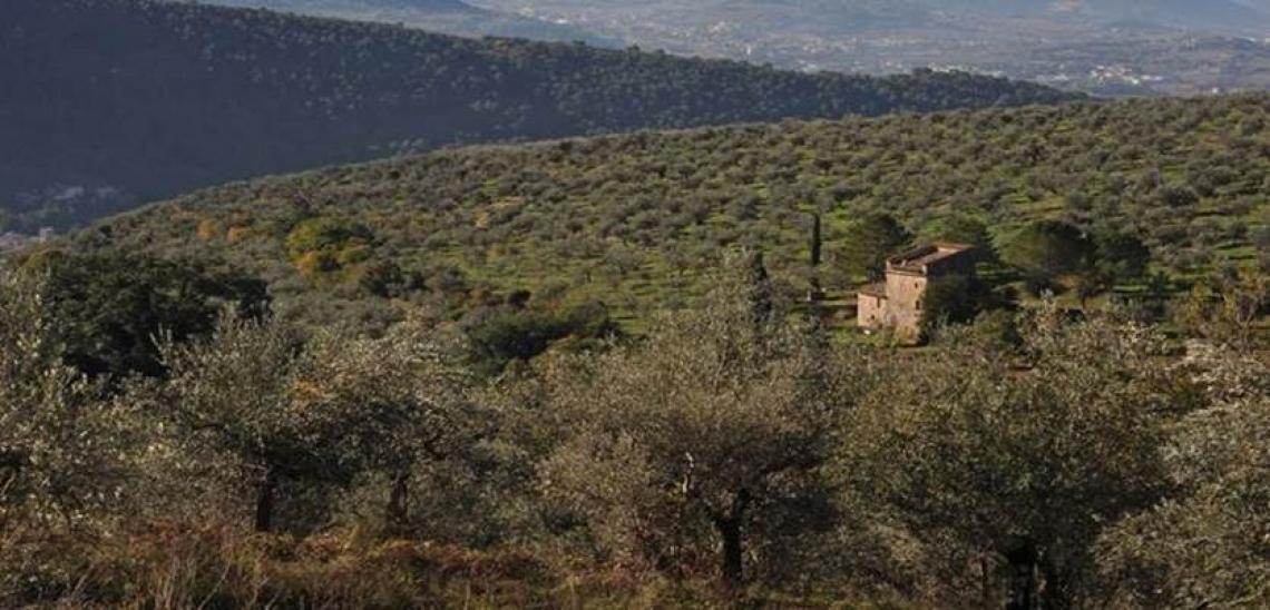 Quando l'olivo diventa un patrimonio vivente multifunzionale
