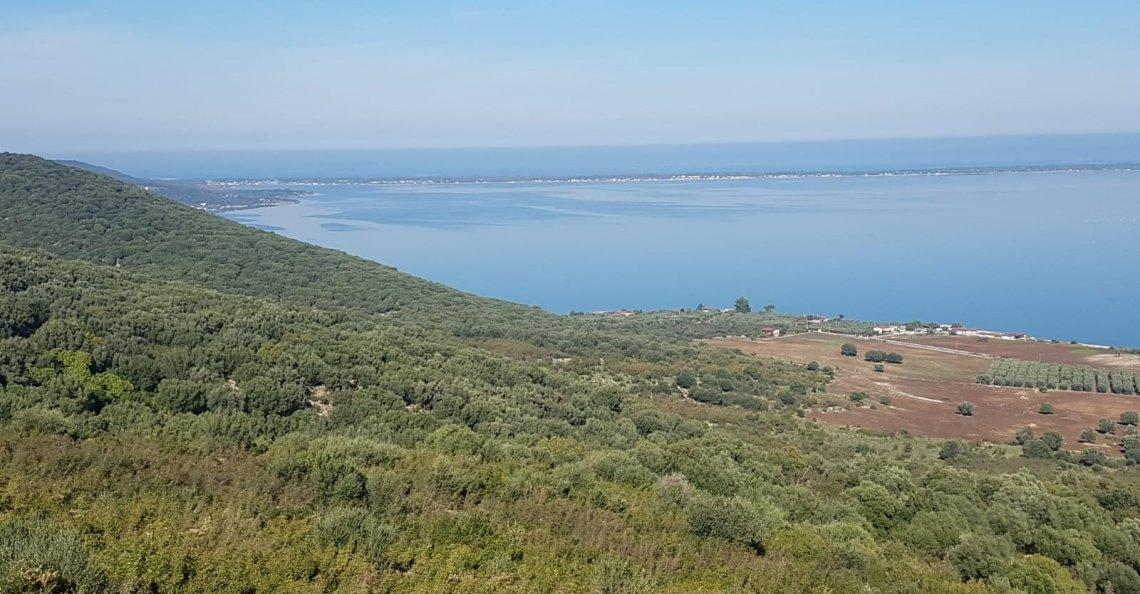 L'olivicoltura del promontorio del Gargano, un passato lontano e un futuro tutto da scrivere