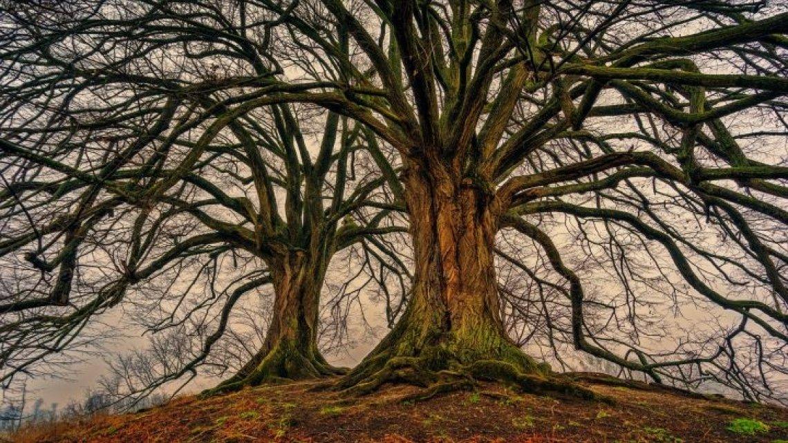 Più di metà degli alberi europei è a rischio estinzione