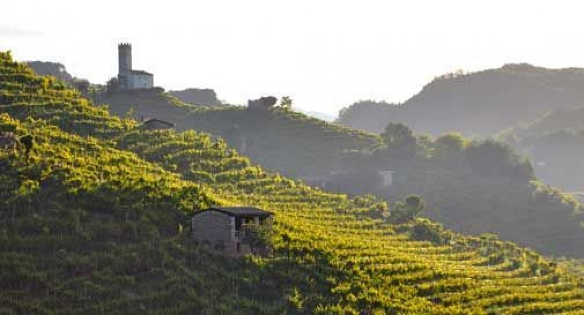 Nessun rischio per le vigne del Prosecco Docg secondo il Consorzio