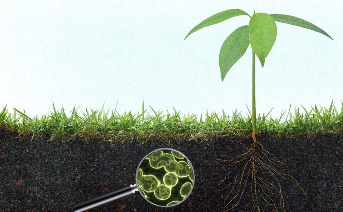 I microrganismi utili in agricoltura