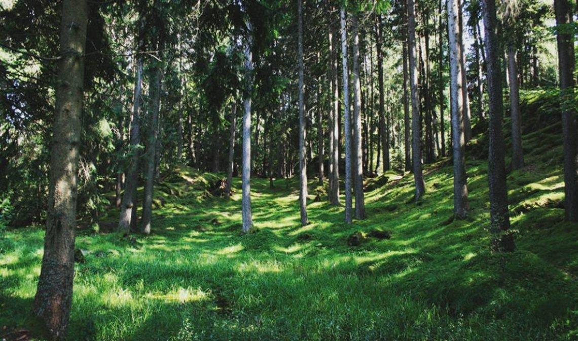 Foreste italiane: nuova linfa dai decreti ministeriali sbloccati