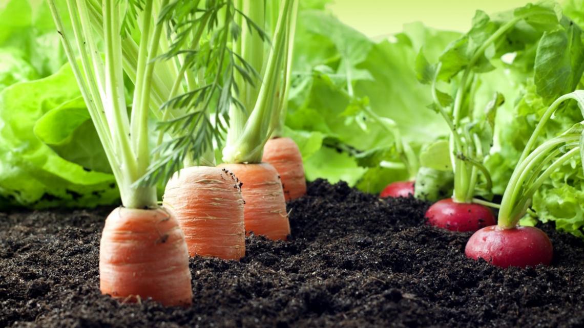 L'alimentare biologico premiato dai consumatori alla ricerca di qualità e sicurezza