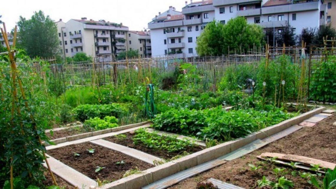 Il potenziale inespresso dell'orticoltura urbana per il futuro della sicurezza alimentare