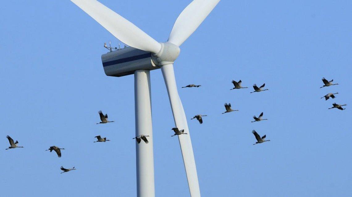 L'impatto ambientale nascosto dell'energia eolica