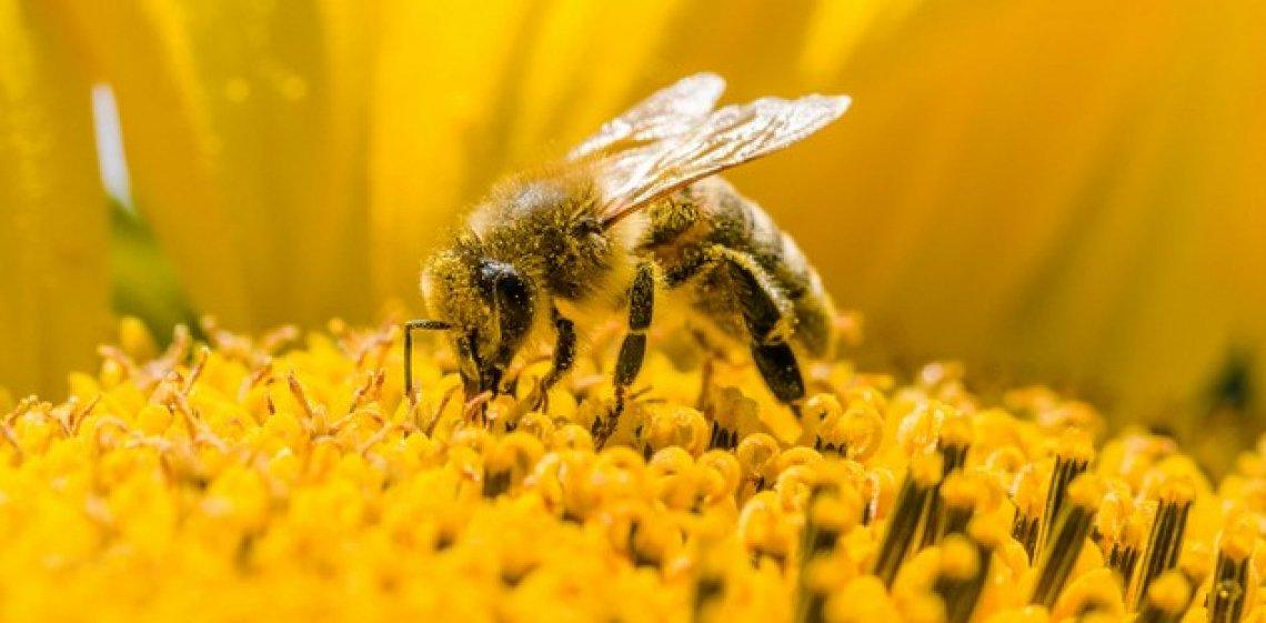 Il ruolo delle api visto dalla ricerca scientifica