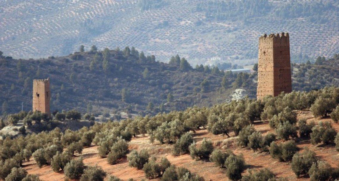 Approvata dall'Unione europea la più grande IGP olearia d'Europa