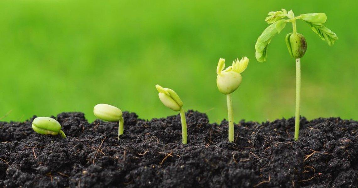 L'innovazione è un driver importante per la crescita e lo sviluppo dell'agricoltura