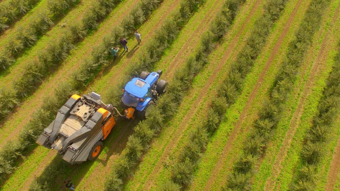 Negli oliveti intensivi è possibile sostituire la fertilizzazione classica con i biostimolanti?