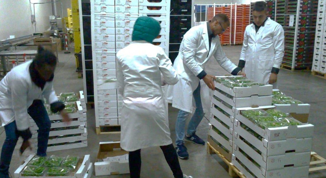 Innovazione e sostenibilità nel settore del packaging per i prodotti ortofrutticoli