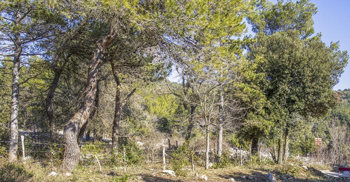 """Al via il progetto """"Boschi di Gran Cereale"""": così Barilla salva sei boschi italiani"""