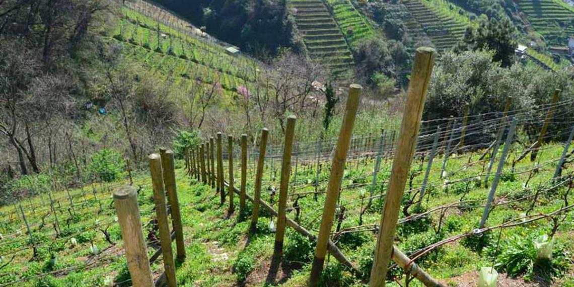 Firmato il decreto per la tutela e valorizzazione della viticoltura eroica