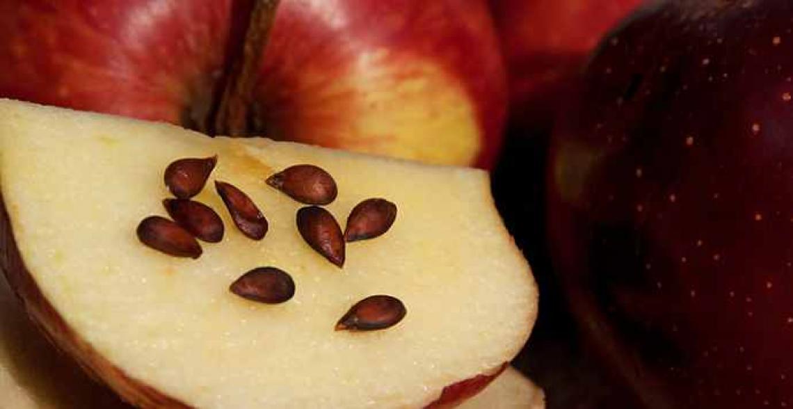 Ora nasce l'olio di semi di mela, per uso alimentare e cosmetico