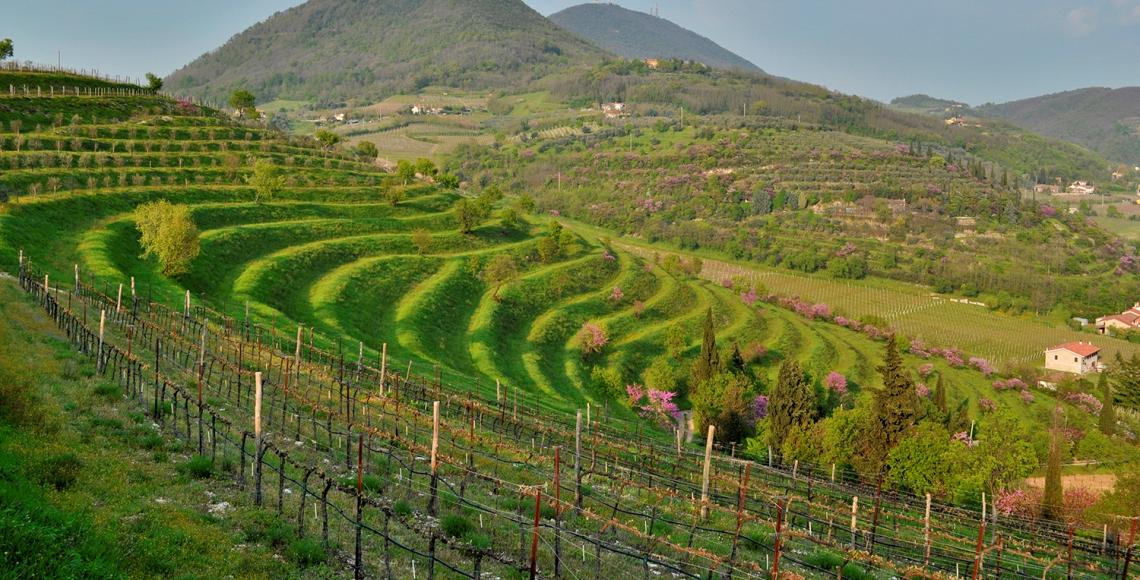 Calici di Stelle nella Città del Vino di Vo' Euganeo