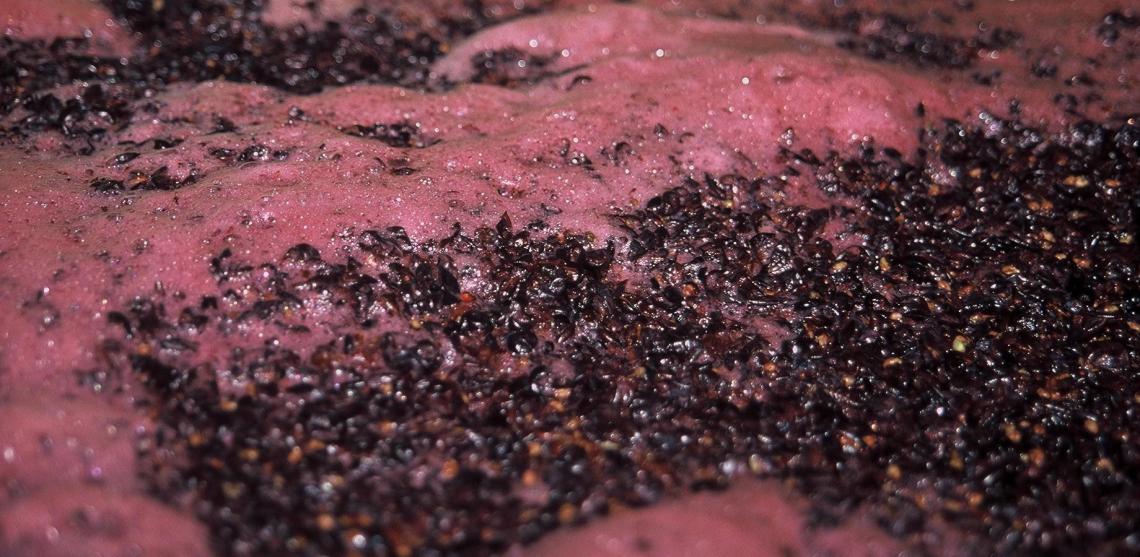 L'influenza sulla vitalità dei lieviti di fermentazione di improvvisi sbalzi termici