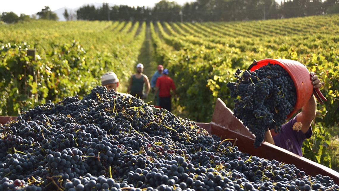 Vendemmia ottima ma il mercato del vino è in affanno