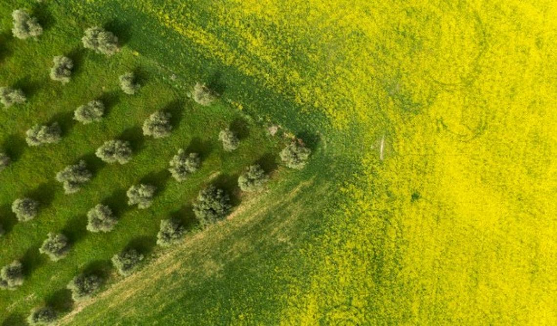 Servono ingenti fondi per attuare i progetti europei Biodiversity e From Farm to Fork