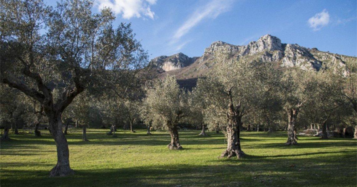 Il parco regionale dell'olivo di Venafro in Molise ha bisogno di tutela
