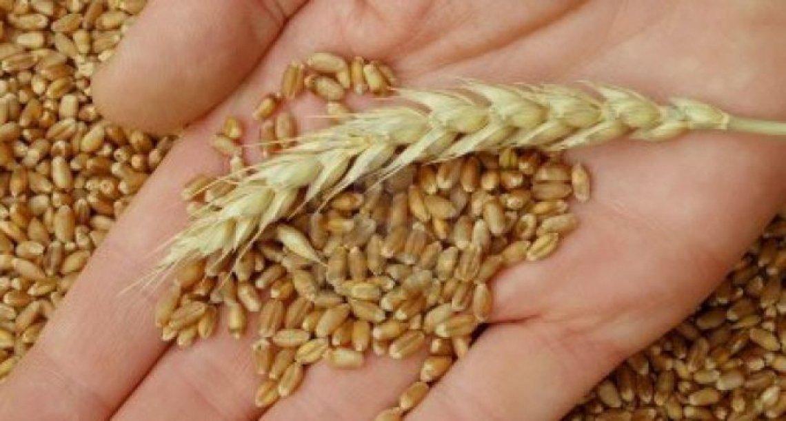 Dagli scarti di patata e e rucola nuovi fungicidi per il grano