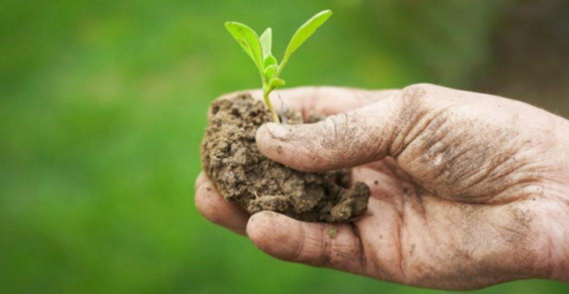 Il biologico continua a veleggiare verso nuovi traguardi di crescita ma vuole regole certe