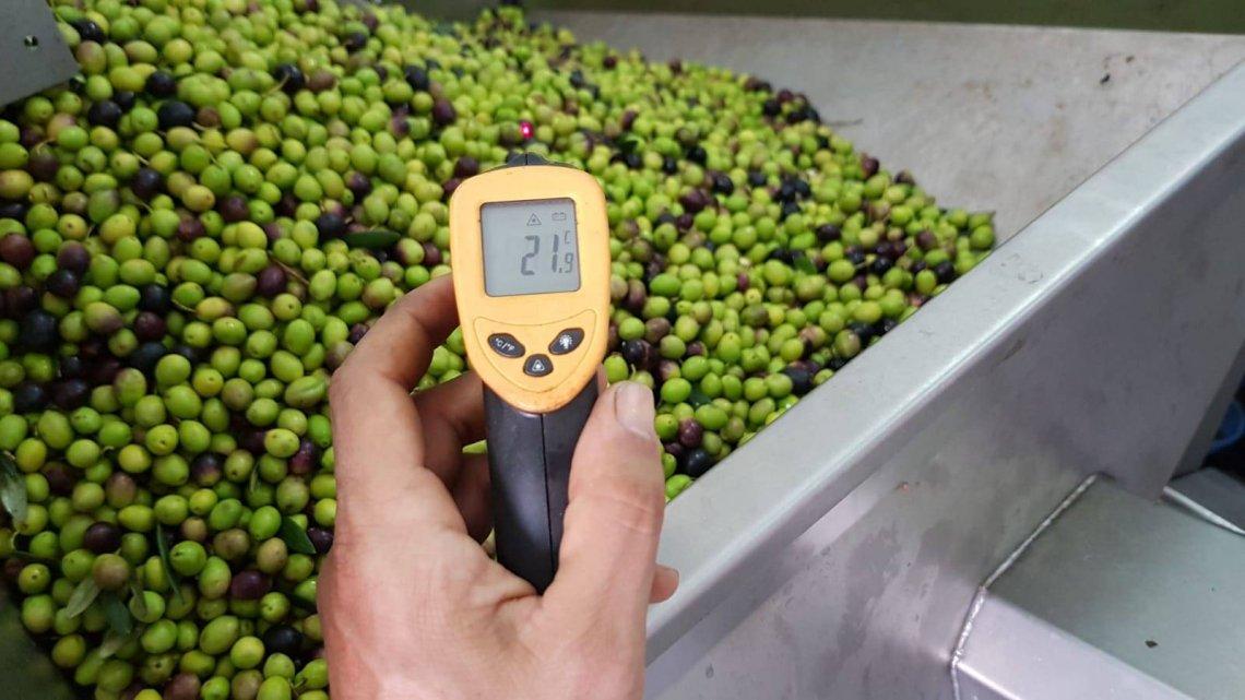 Ultima chiamata per diventare veri professionisti della filiera dell'olio d'oliva