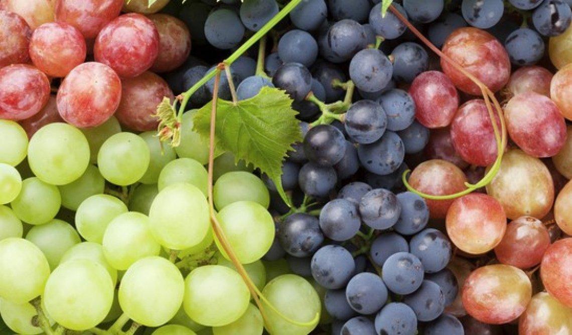 Nuova vita per l'uva da tavola italiana con export da record