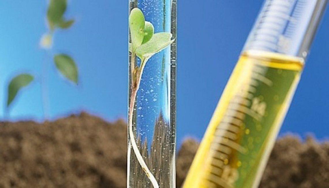 Le biomasse fondamentali per costruire una vera economia circolare