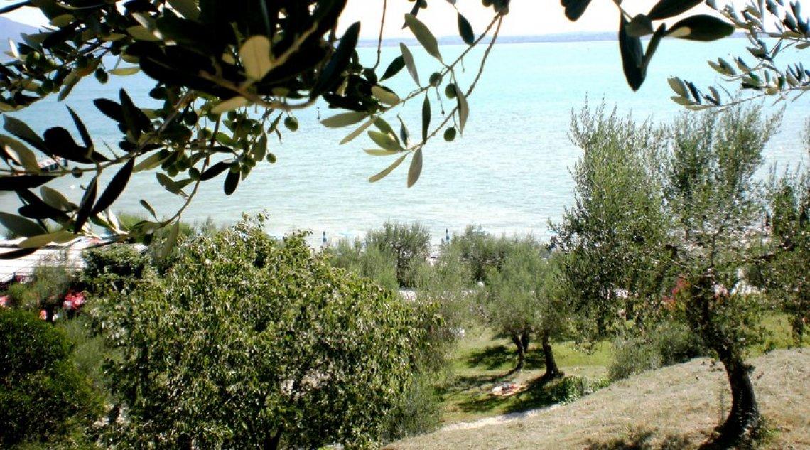 L'origine della Casaliva e il legame indissolubile col territorio del Garda