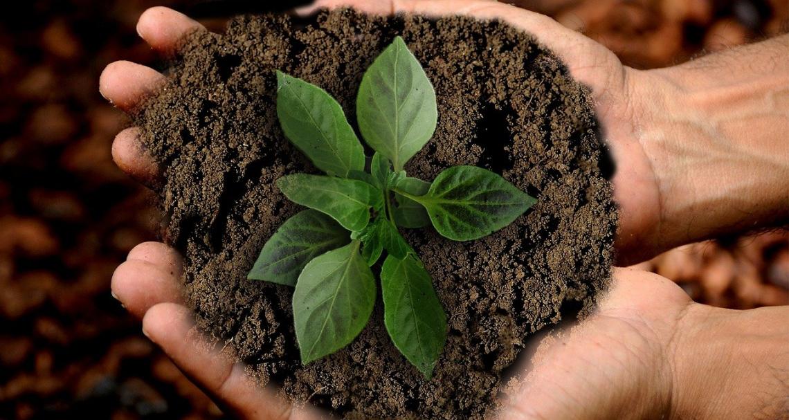 Gli Agronomi e Forestali entrano a far parte dell'Alleanza Italiana per lo Sviluppo Sostenibile