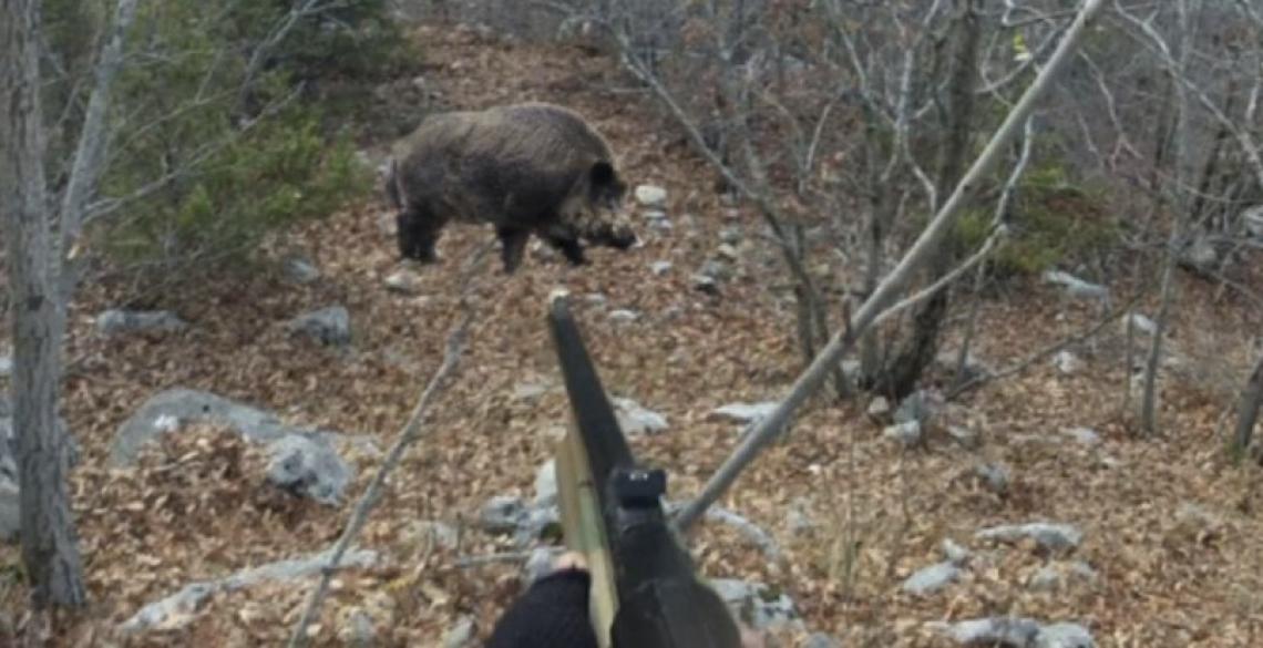 Amministrare e gestire la fauna selvatica è una professione