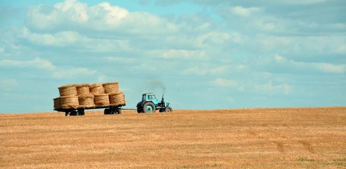 L'impatto del Reddito di Cittadinanza sul mercato del lavoro agricolo