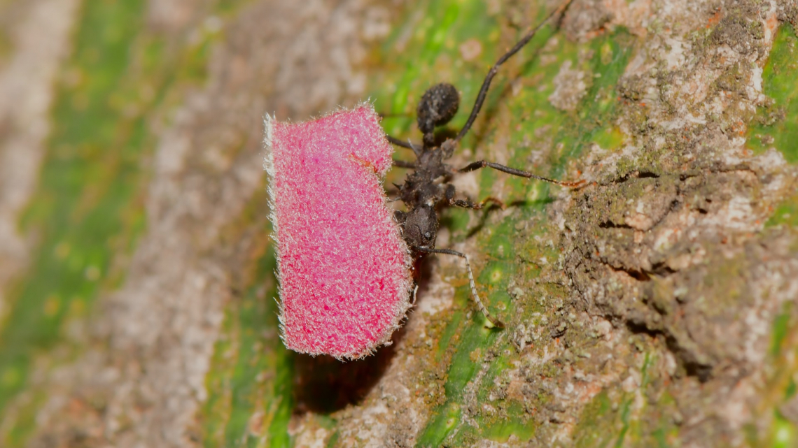 Un nuovo composto antifungino dai formicai