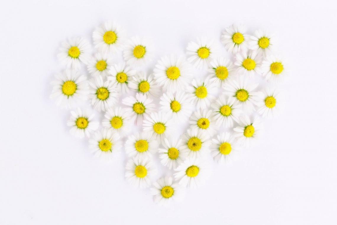 Il significato dei fiori: ad ogni colore un'emozione