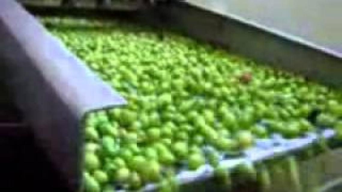 Firmato il decreto sui nuovi programmi di sostegno al comparto olivico-oleario nazionale
