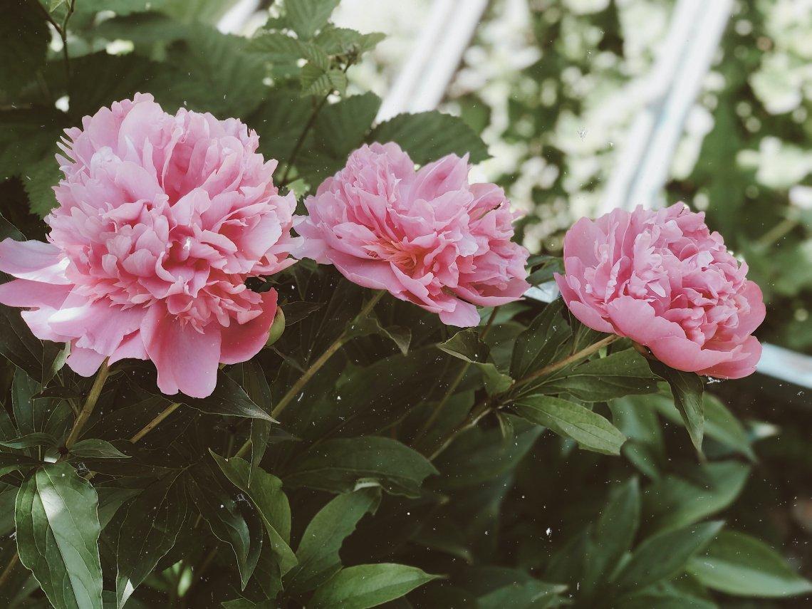 Per la Festa della Mamma un fiore non può mancare