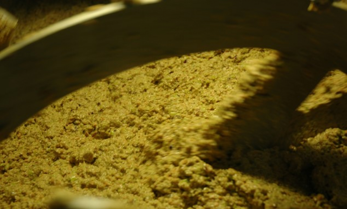 Come aumentare la resa in frantoio di 2 punti su olive mature