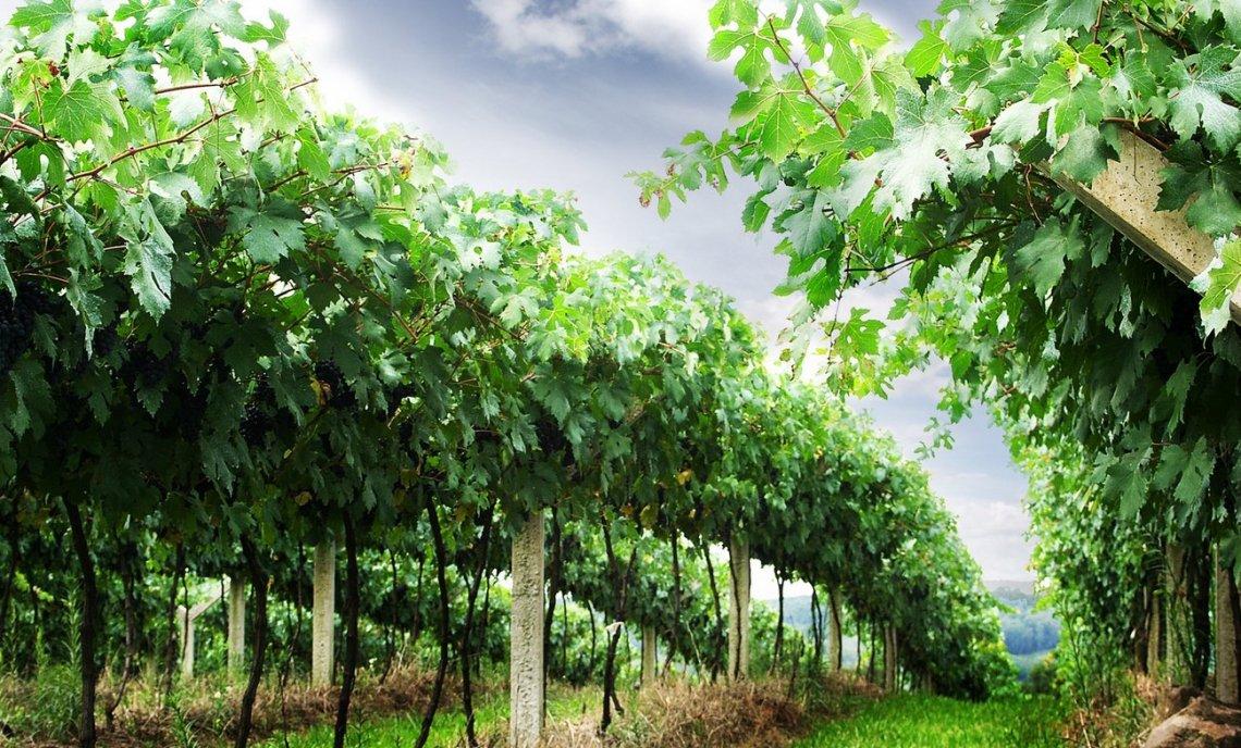 La forza turistico-attrattiva delle imprese del vino nonostante il Covid